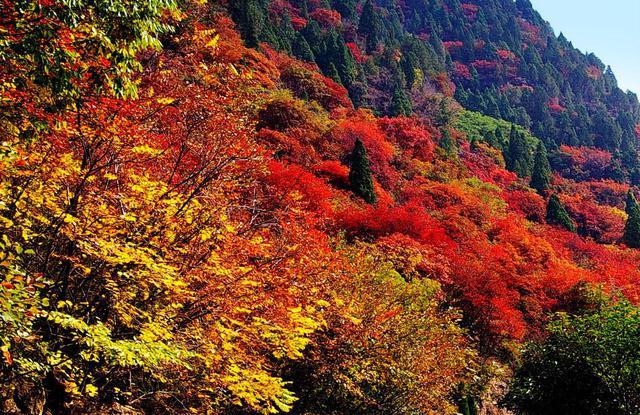 【万达周边】锦江木屋村原生态,文化体验之旅<4人小包团,含车费门票>